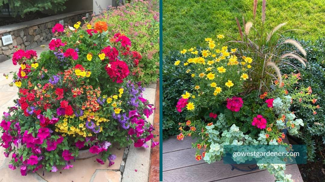 Big flower pots give you more flower design options, like these colorful flower pots