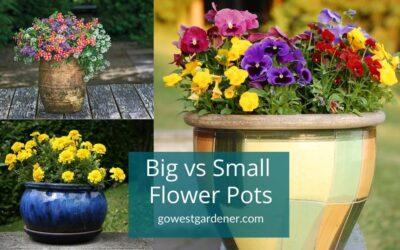 """Should I Buy Big or Small Flower Pots?"""