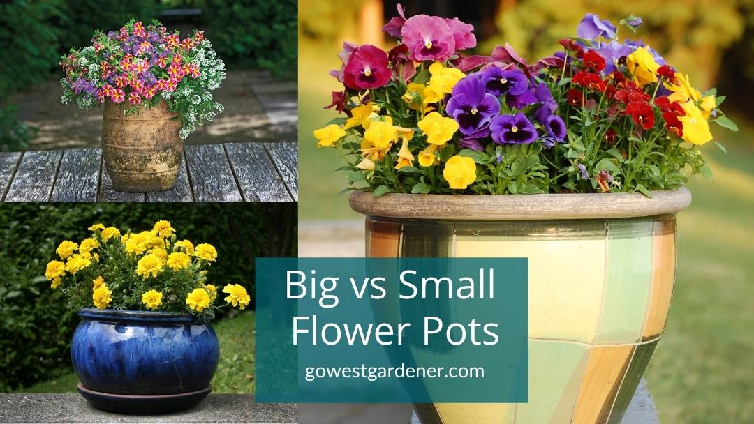 Big vs small flower pots: Which is better?