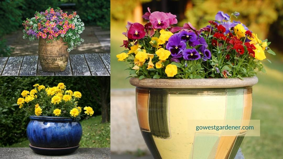 Examples of pretty flower pots