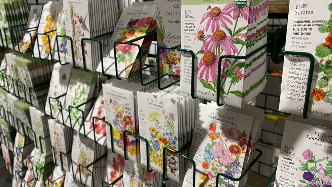 Packets of flower seeds on display at the garden center store