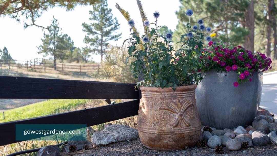Big flower pots with a western vibe in a Colorado landscape