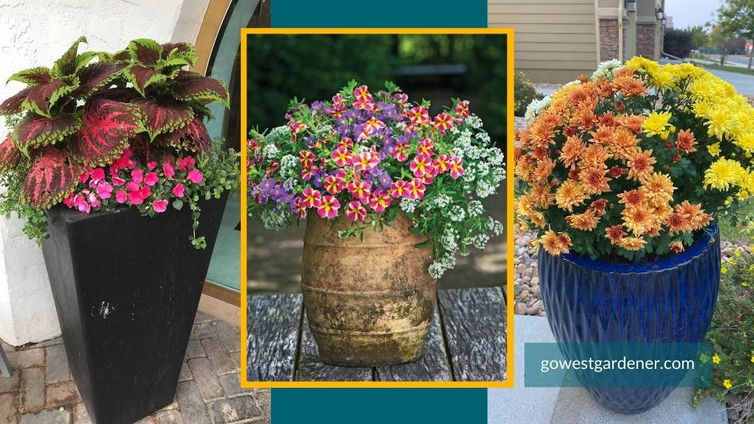 Tall, skinny flower pots are good for small spaces or narrow opening.