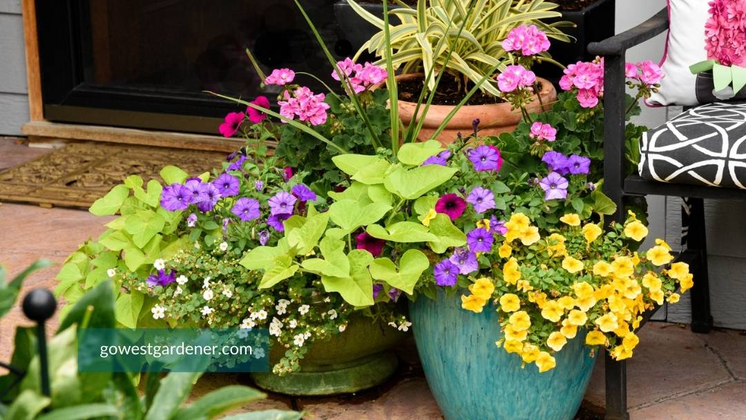 A grouping of medium size flower pots create visual interest