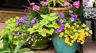 What type of flowerpot gardener are you?
