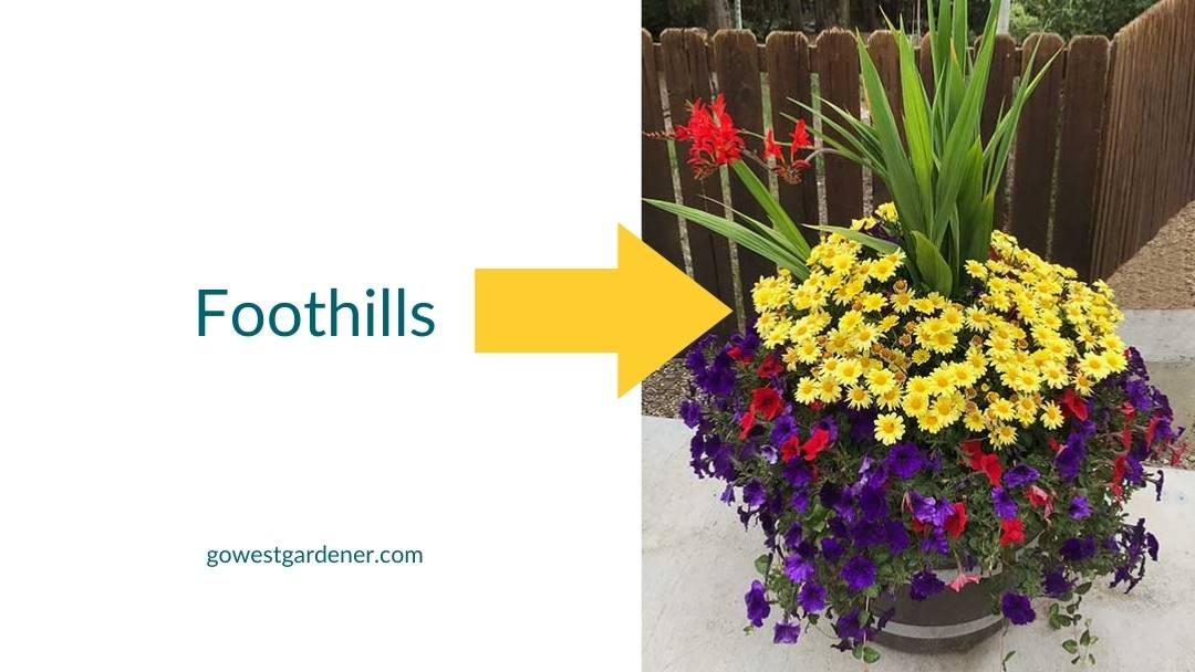 A simple flowerpot design tip: Include filler flowers like these marguerite daisies to add color and texture