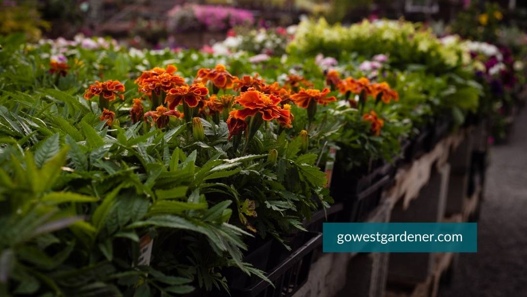 How to choose flowers when you have so many choices