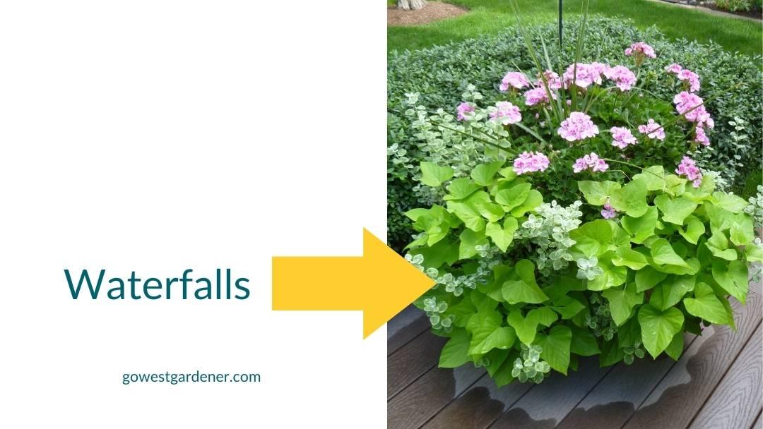 Make your flowerpots prettier with spiller flowers that cascade out of a flowerpot like a waterfall