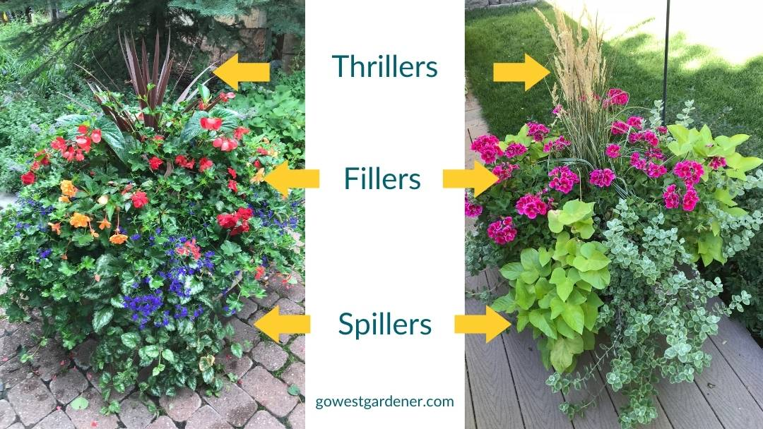 Examples of thrillers, fillers and spillers in two colorful flowerpots of flowers