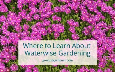 """""""Where Can I Learn About Waterwise Flower Gardening?"""""""