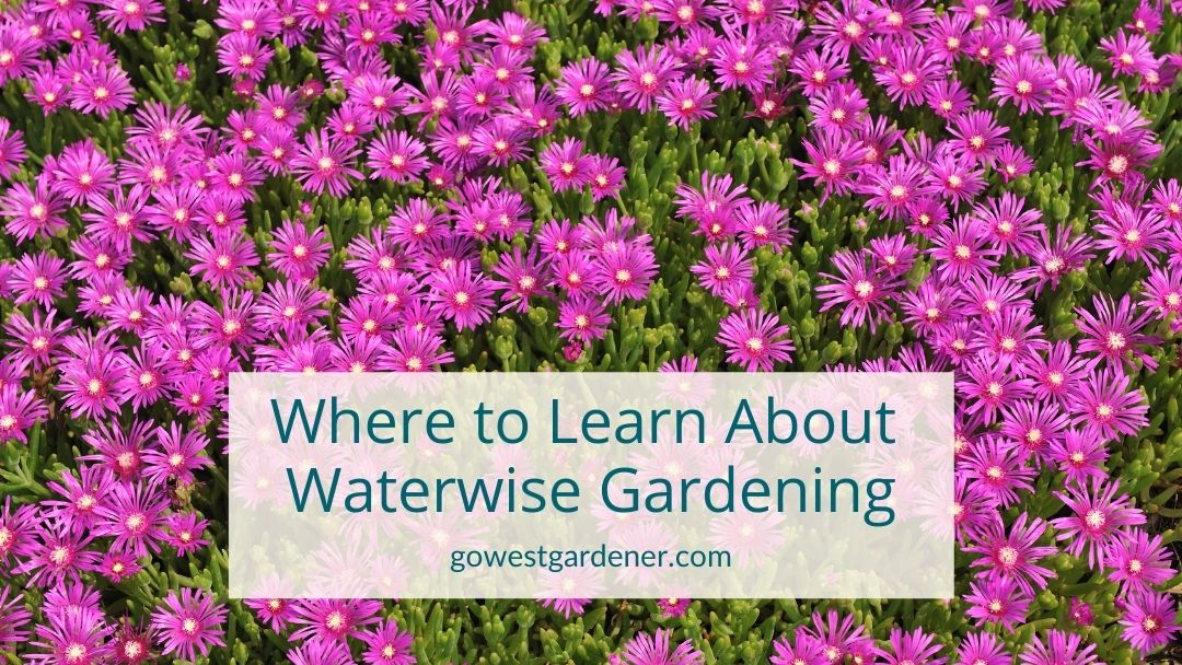 Where to learn about waterwise flower gardening