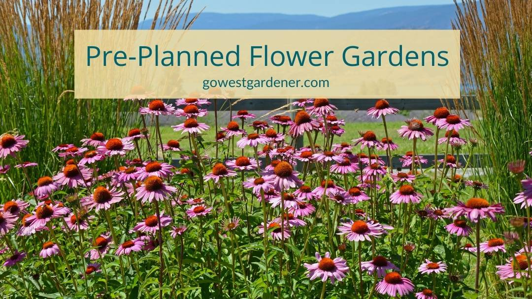 Example of a pre-planned flower garden featuring echinacea (purple coneflower) and ornamental grasses