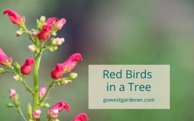 Red Birds in a Tree: A Drought-Tolerant Flower That's a MAGNET for Hummingbirds