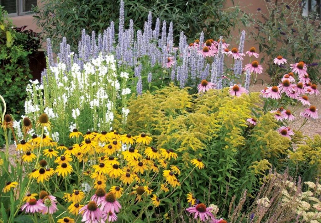 The Summer Dreams Pre-Planned Garden from High Country Gardens planted in New Mexico