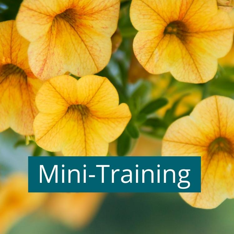 Summer mini-training in flowerpots: How to get more colorful blooms