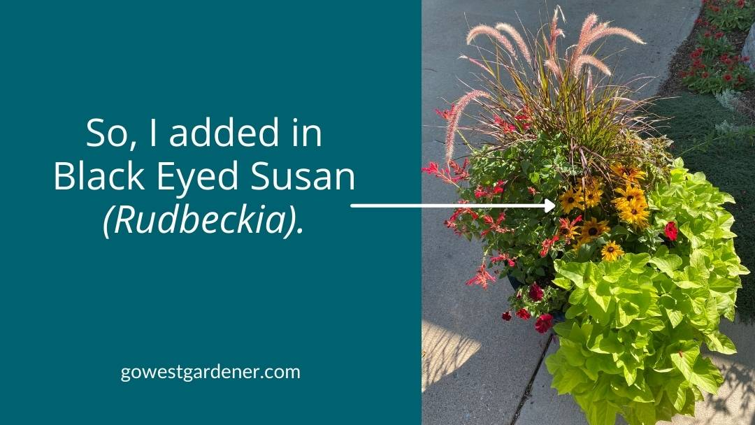 So I changed the flowers in my flowerpot, adding in Black Eyed Susan (Rudbeckia).