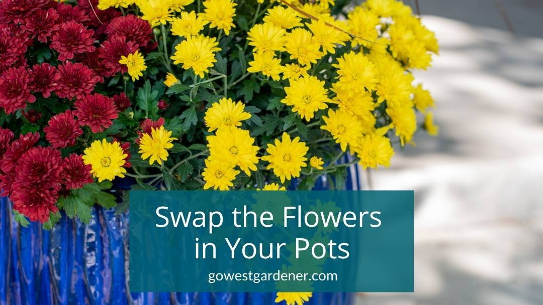"""""""Can I change the flowers in my flowerpots?"""" Tips for swapping flowers"""