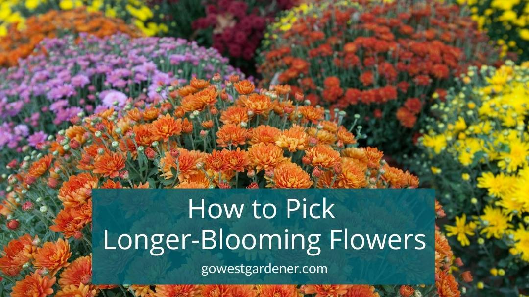 How to Choose Fall Flowers That Last Longer: 3 Simple Tips