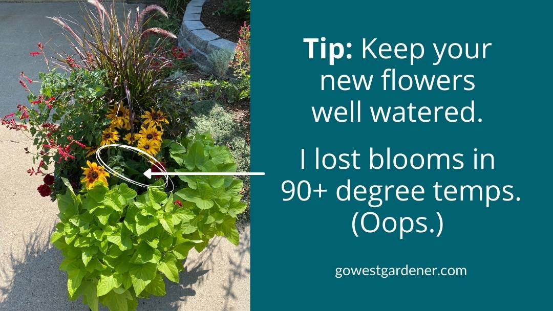 Keep your newly planted flowers well watered if you change your flowers.