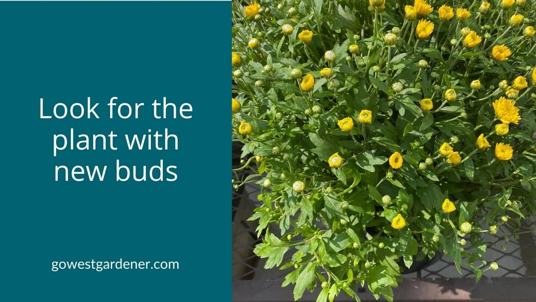 Look for flower plants that have a lot of new buds.