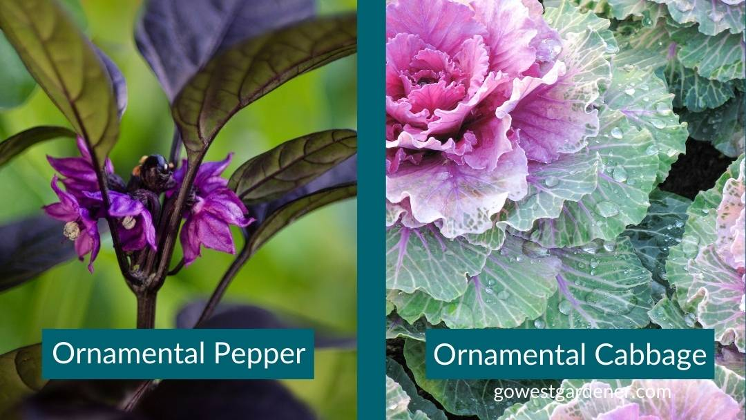 Ornamental pepper and ornamental cabbage are great flowers to add to flowerpots in autumn.