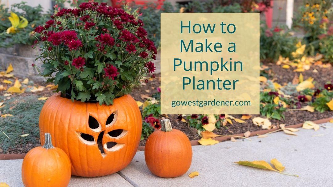 Jack O'Planters: How to Use a Pumpkin as a Planter