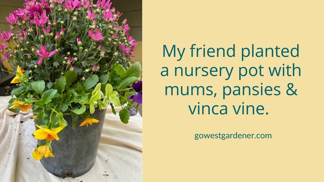 You can plant a mix of fall flowers in your pumpkin planters.
