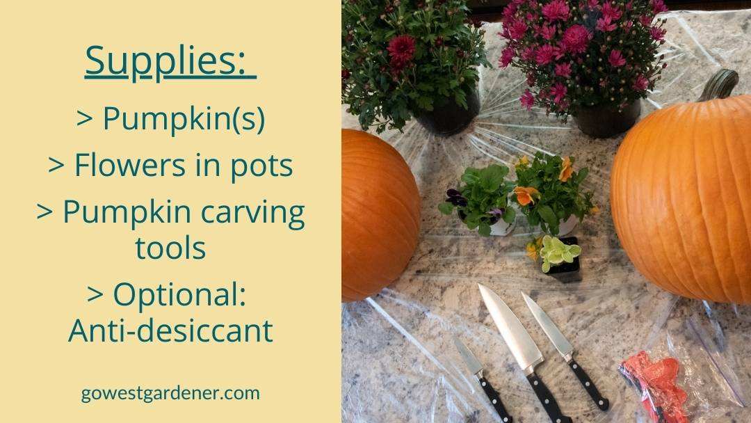 What you need to make a pumpkin planter: supply list of pumpkins, flowers in pots, pumpkin carving tools, and anti-desiccant