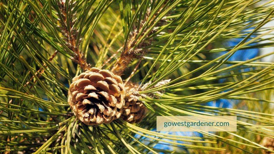 Don't plant evergreen trees and shrubs in the fall in states like Colorado.