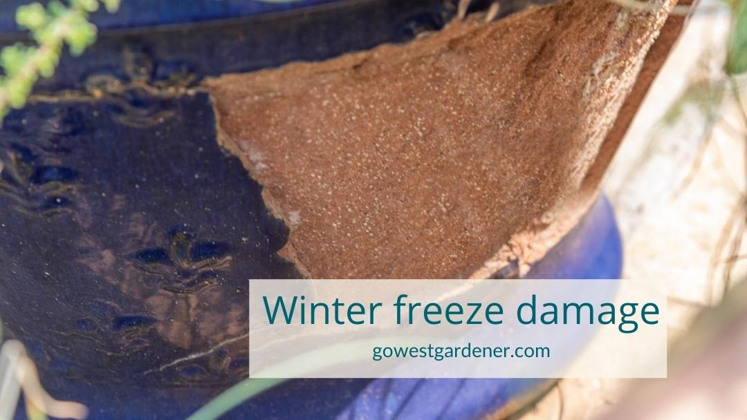 Example of winter freeze damage on a glazed ceramic outdoor pot