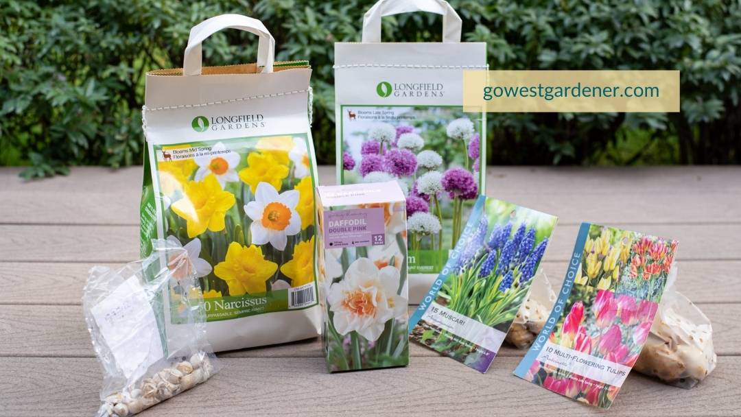 When you're buying spring flowering bulbs, you'll find a variety of packages.