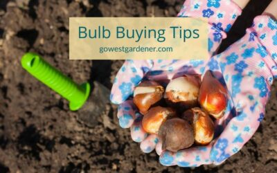 5 Helpful Tips for Buying Spring Flowering Bulbs in the Fall