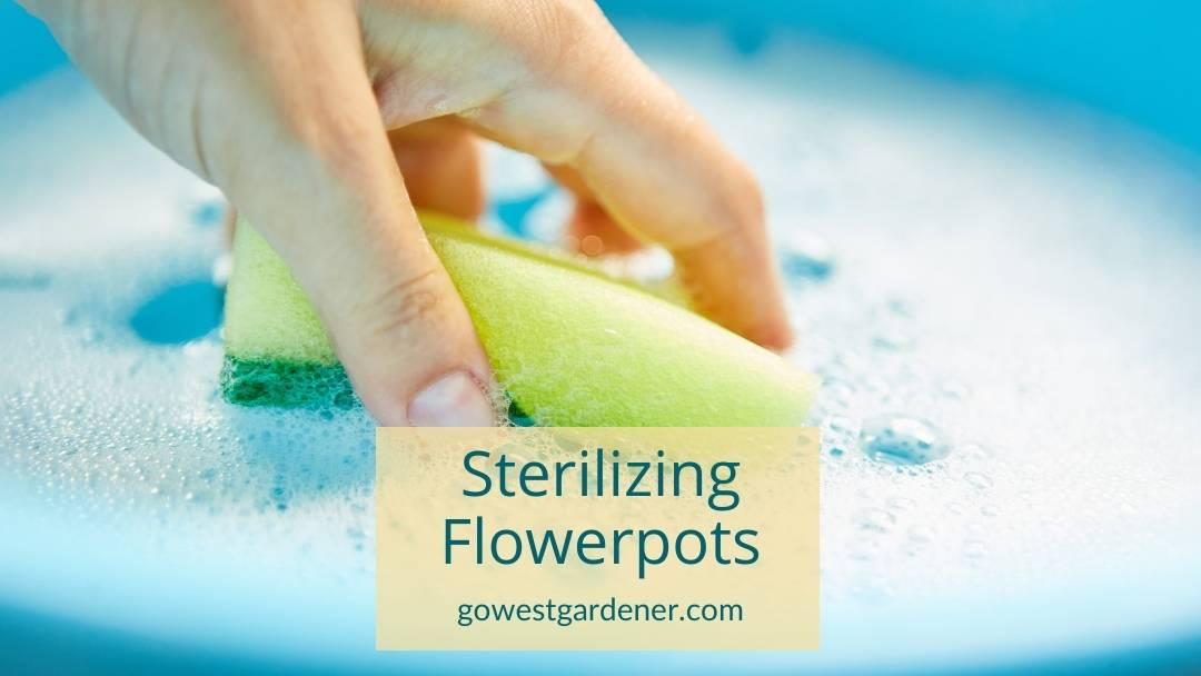 How to sterilize flowerpots