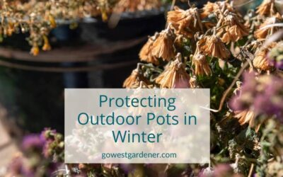 What to Do With Outdoor Pots in the Winter, So They Look Good for Many Seasons