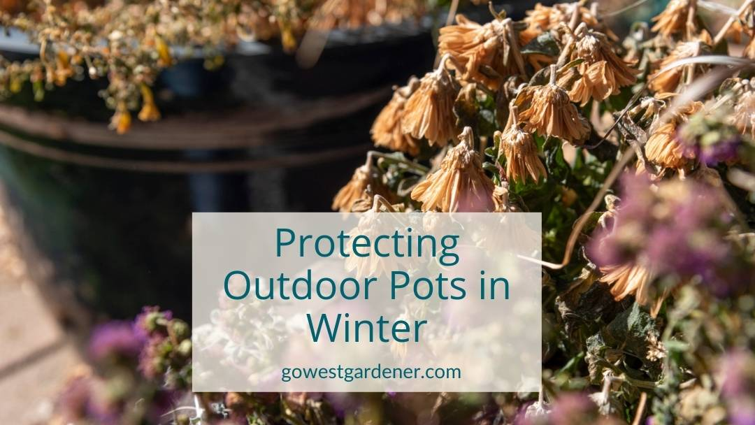What to do with outdoor pots in winter - simple tips